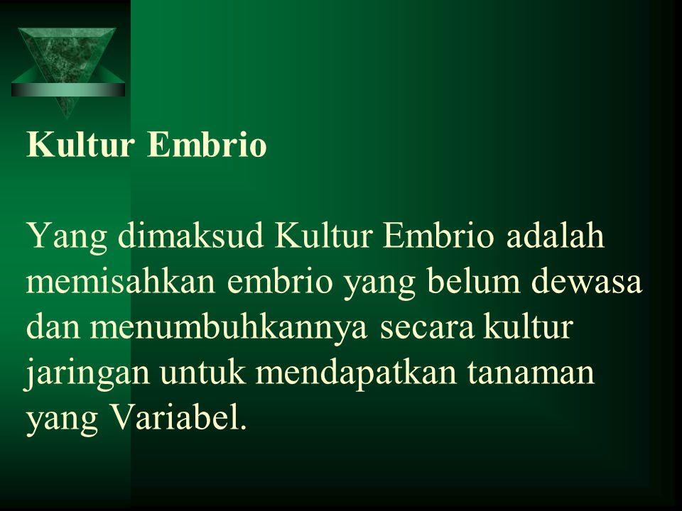 Kultur Embrio Yang dimaksud Kultur Embrio adalah memisahkan embrio yang belum dewasa dan menumbuhkannya secara kultur jaringan untuk mendapatkan tanaman yang Variabel.