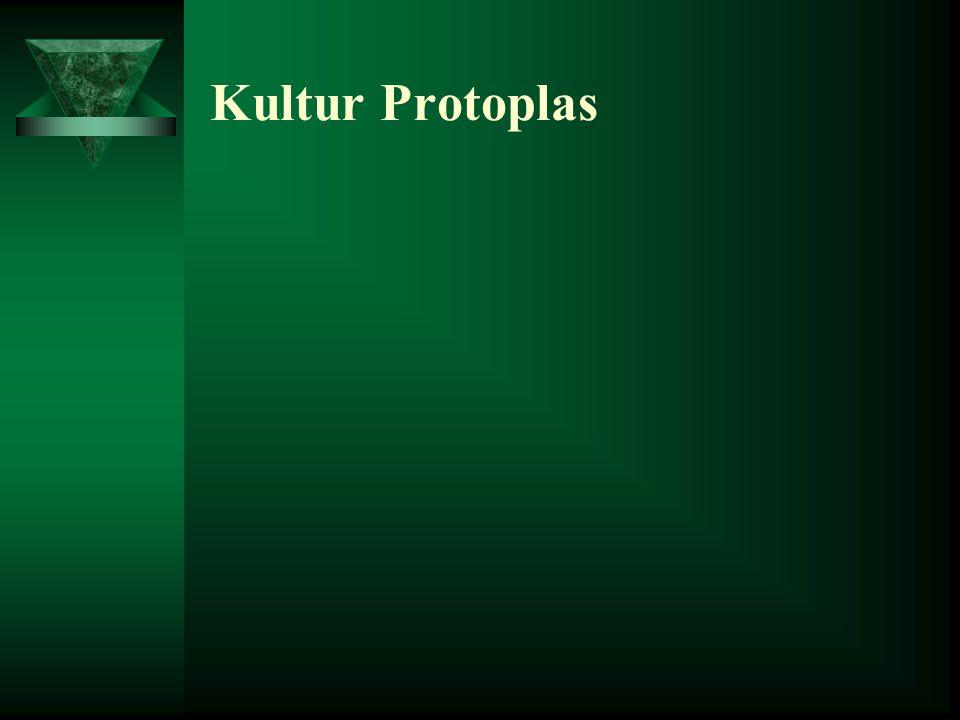 Faktor Keberhasilan Kultur Embrio –Genotif: –Pada bebrapa jenis tumbuhan, embrio mudak tumbuh tetapi pada beberapa jenis tumbuhan lain sukar untuk tum