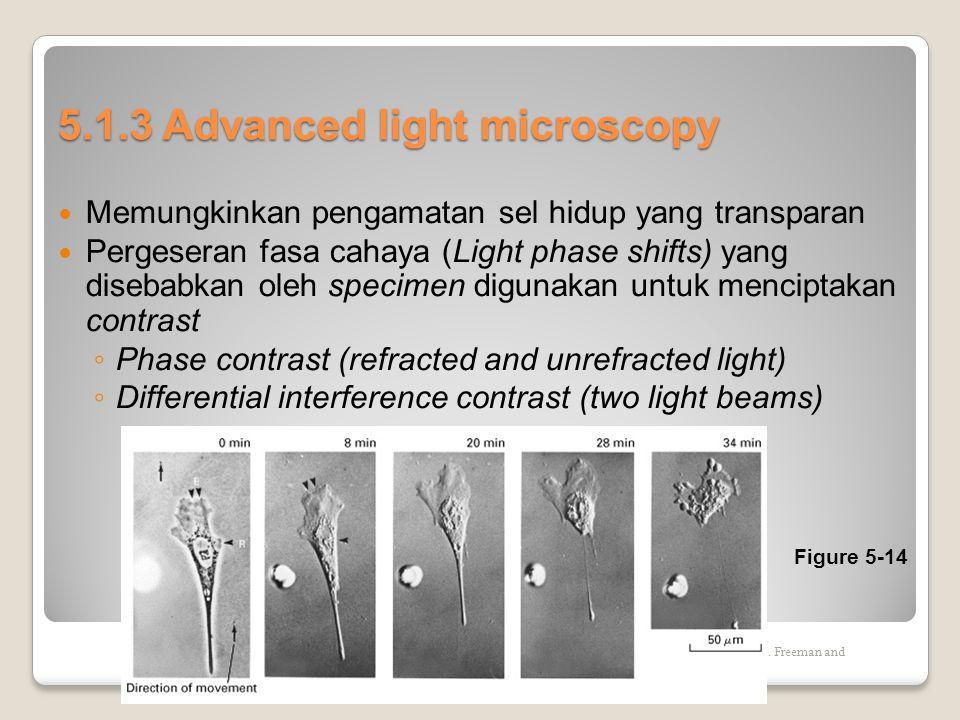5.1.3 Advanced light microscopy  Memungkinkan pengamatan sel hidup yang transparan  Pergeseran fasa cahaya (Light phase shifts) yang disebabkan oleh specimen digunakan untuk menciptakan contrast ◦ Phase contrast (refracted and unrefracted light) ◦ Differential interference contrast (two light beams) Copyright (c) by W.