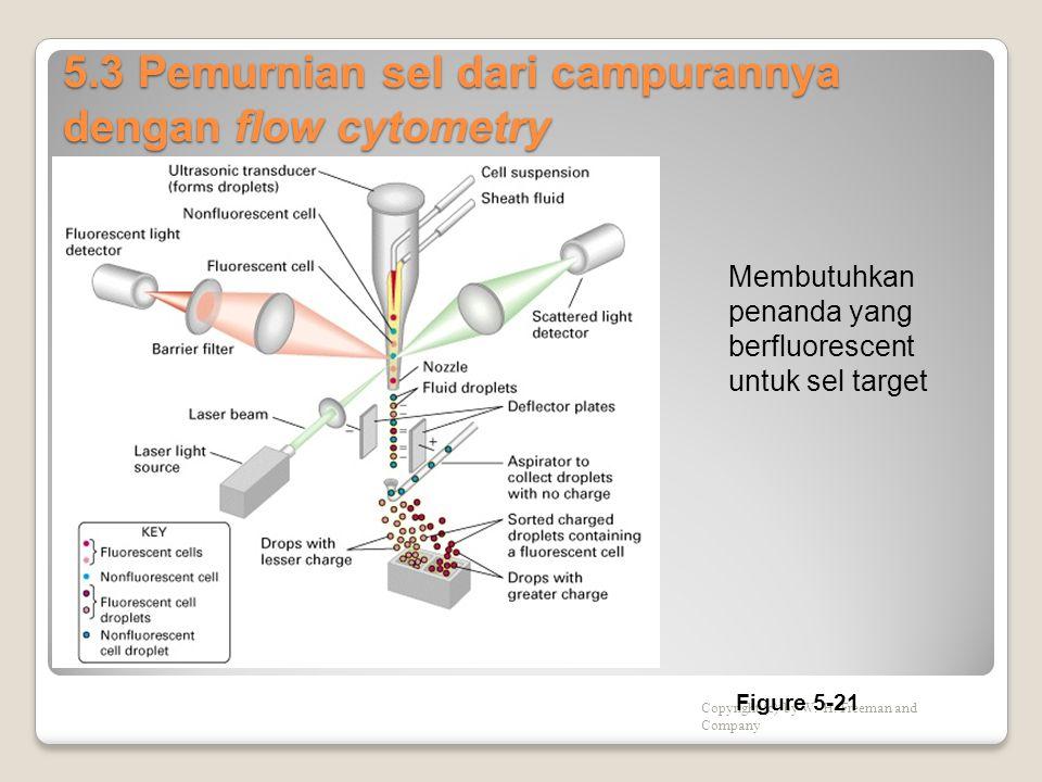 5.3 Pemurnian sel dari campurannya dengan flow cytometry Copyright (c) by W. H. Freeman and Company Figure 5-21 Membutuhkan penanda yang berfluorescen