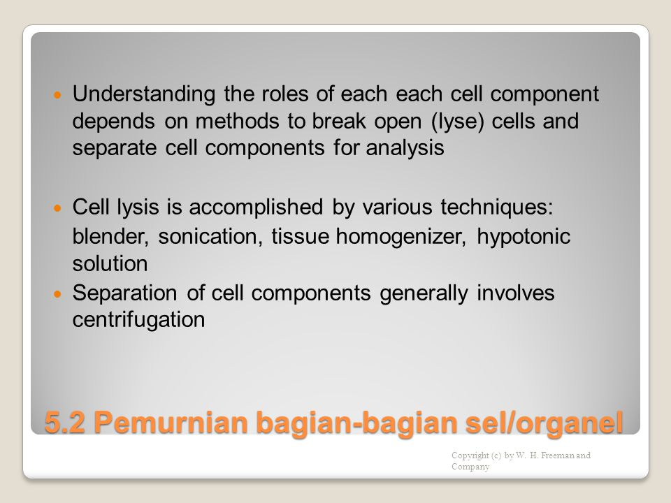 5.2 Pemurnian bagian-bagian sel/organel  Understanding the roles of each each cell component depends on methods to break open (lyse) cells and separate cell components for analysis  Cell lysis is accomplished by various techniques: blender, sonication, tissue homogenizer, hypotonic solution  Separation of cell components generally involves centrifugation Copyright (c) by W.