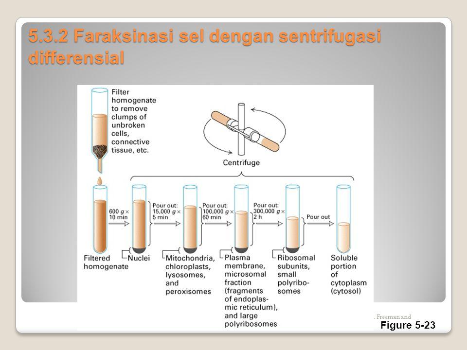 5.3.2 Faraksinasi sel dengan sentrifugasi differensial Copyright (c) by W. H. Freeman and Company Figure 5-23
