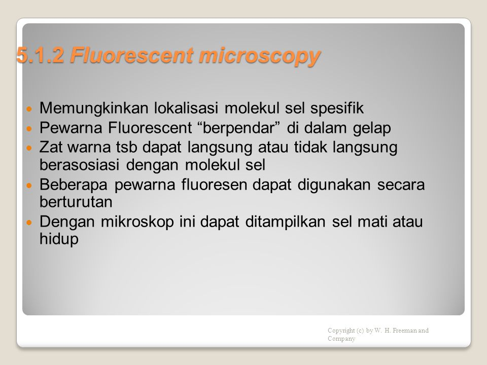 5.1.2 Fluorescent microscopy  Memungkinkan lokalisasi molekul sel spesifik  Pewarna Fluorescent berpendar di dalam gelap  Zat warna tsb dapat langsung atau tidak langsung berasosiasi dengan molekul sel  Beberapa pewarna fluoresen dapat digunakan secara berturutan  Dengan mikroskop ini dapat ditampilkan sel mati atau hidup Copyright (c) by W.