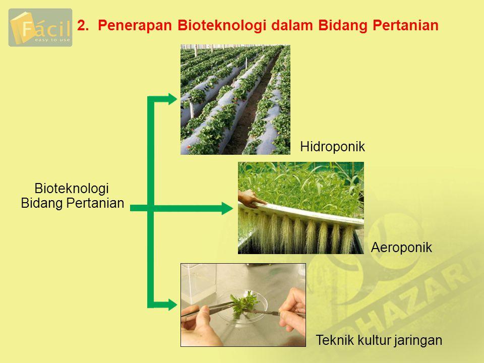 2. Penerapan Bioteknologi dalam Bidang Pertanian Hidroponik Bioteknologi Bidang Pertanian Aeroponik Teknik kultur jaringan