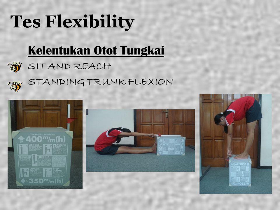 Tes Flexibility Kelentukan Otot Tungkai SIT AND REACH STANDING TRUNK FLEXION