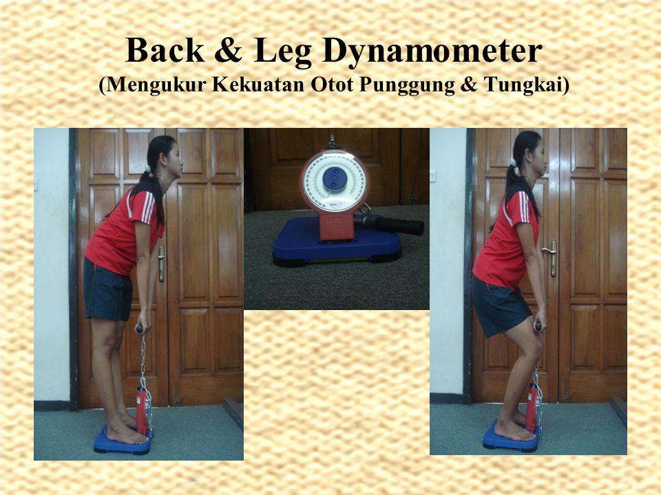 Back & Leg Dynamometer (Mengukur Kekuatan Otot Punggung & Tungkai)