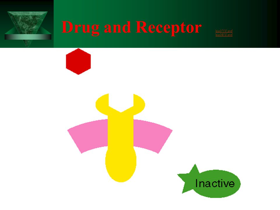 Drug and Receptor bio07[1].swf bio08[1].swf