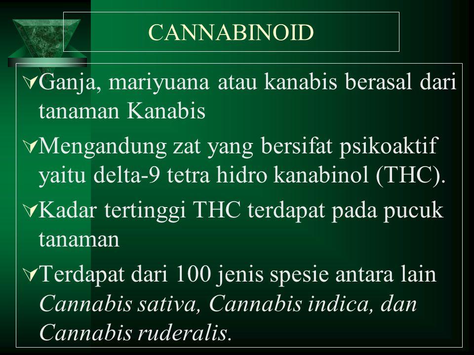 CANNABINOID  Ganja, mariyuana atau kanabis berasal dari tanaman Kanabis  Mengandung zat yang bersifat psikoaktif yaitu delta-9 tetra hidro kanabinol