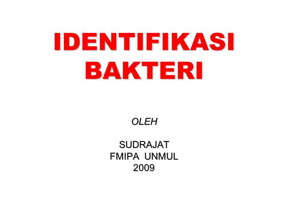 IDENTIFIKASI BAKTERI OLEHSUDRAJAT FMIPA UNMUL 2009