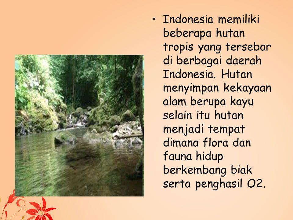 Indonesia memiliki beberapa hutan tropis yang tersebar di berbagai daerah Indonesia. Hutan menyimpan kekayaan alam berupa kayu selain itu hutan menjad