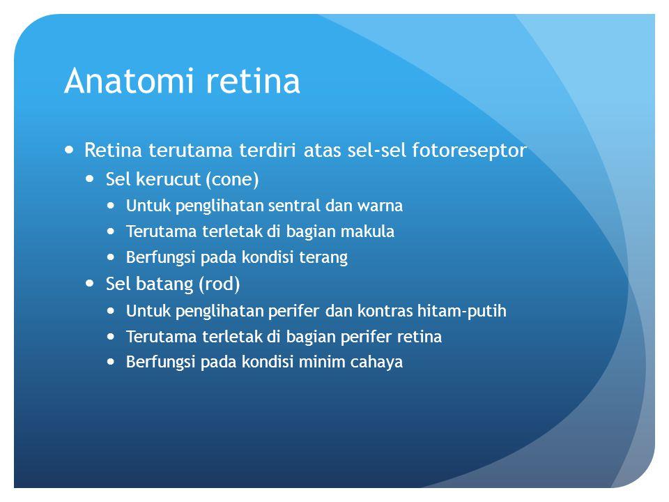 Anatomi retina Retina terutama terdiri atas sel-sel fotoreseptor Sel kerucut (cone) Untuk penglihatan sentral dan warna Terutama terletak di bagian ma