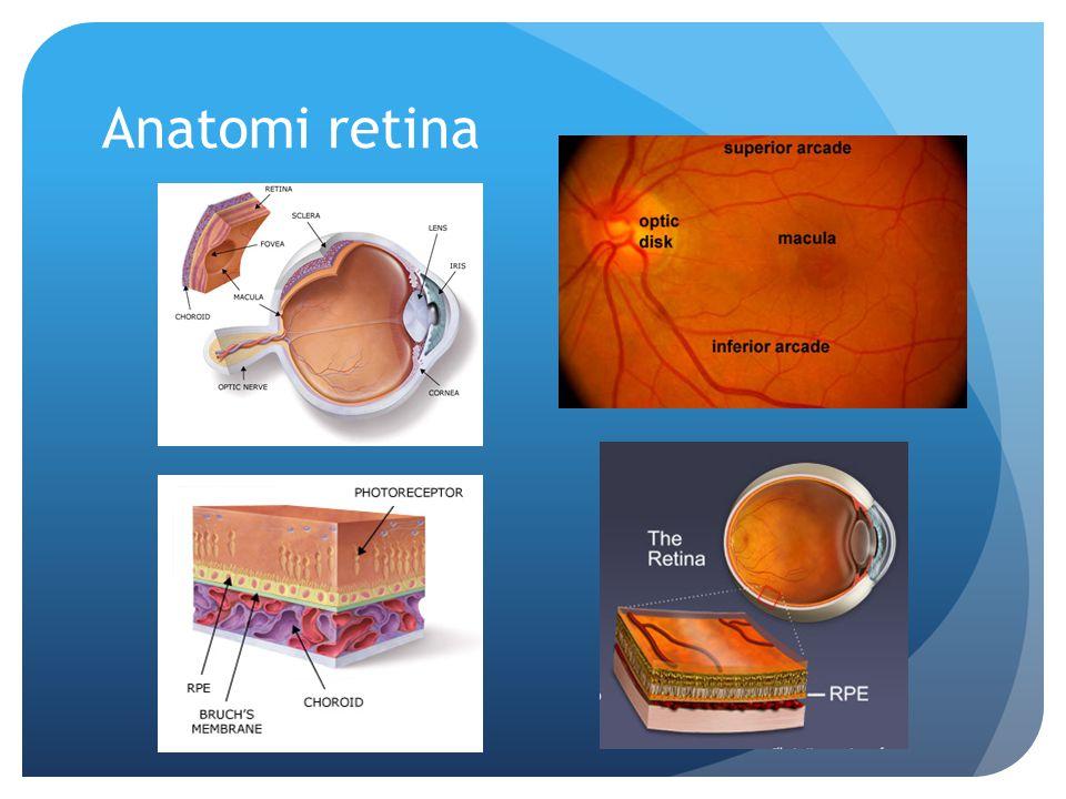 Anatomi retina