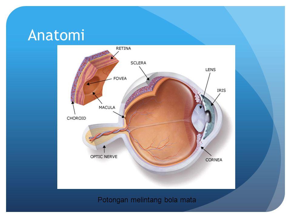 Anatomi Potongan melintang bola mata