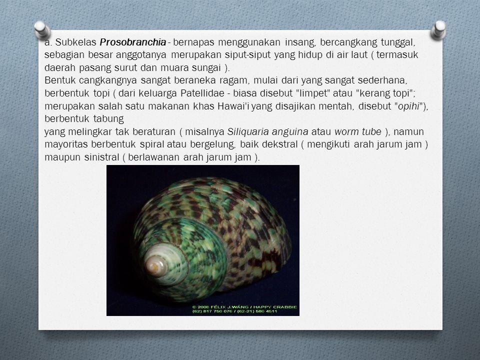 a. Subkelas Prosobranchia - bernapas menggunakan insang, bercangkang tunggal, sebagian besar anggotanya merupakan siput-siput yang hidup di air laut (