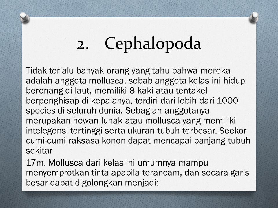 2.Cephalopoda Tidak terlalu banyak orang yang tahu bahwa mereka adalah anggota mollusca, sebab anggota kelas ini hidup berenang di laut, memiliki 8 ka