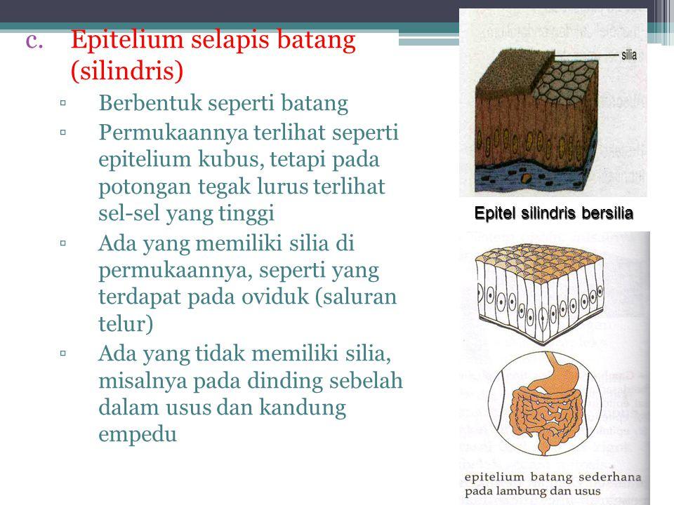 Epitel Pipih Berdasarkan lapisan penyusunnya: 2.Epitel Pipih Berlapis Banyak  Lapisannya banyak dan tersusun sangat rapat  Fungsi sebagai pelindung  Terdapat di jaringan epitelium: a)Rongga mulut, b)Rongga hidung, c)Esofagus, d)Telapak kaki, e)Vagina