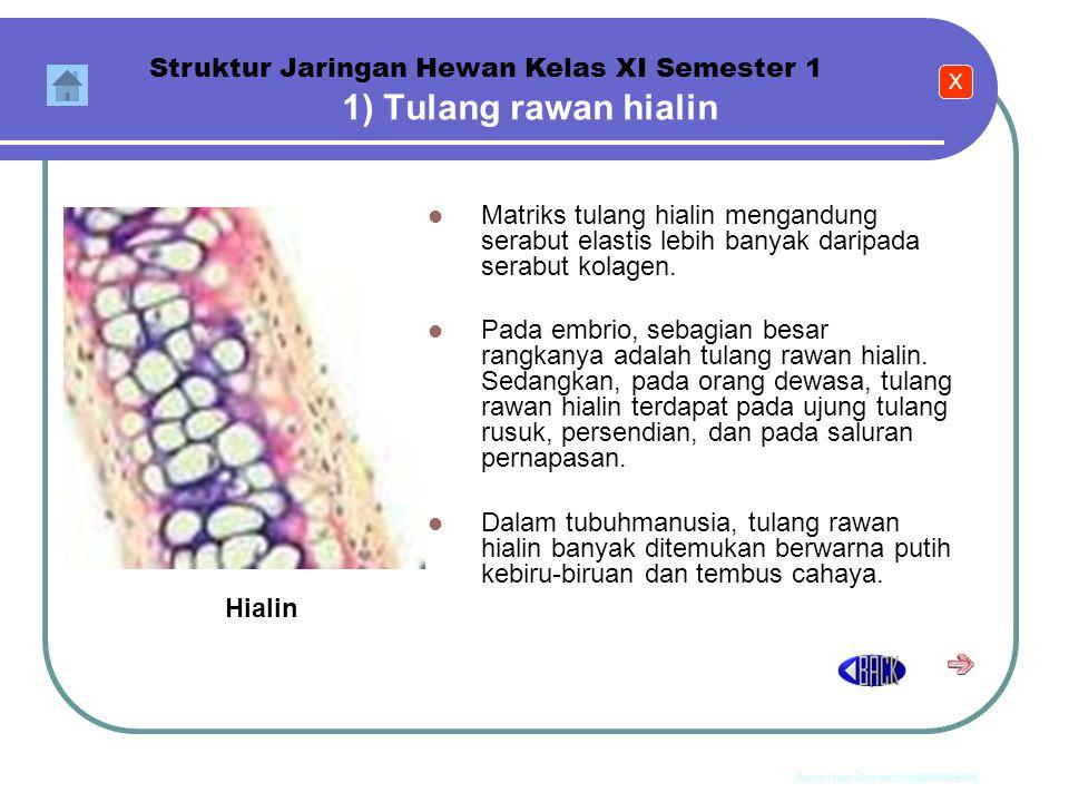 Anim Hadi Susanto 08563559009 Jaringan tulang rawan Jaringan tulang rawan dibedakan menjadi tiga macam, yaitu : 1. tulang rawan hialin, 2. tulang rawa