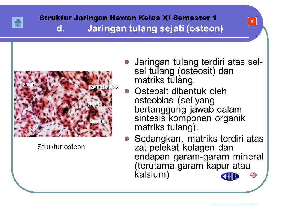 Anim Hadi Susanto 08563559009 3) Tulang rawan fibrosa Matrik tulang rawan fibrosa berwarna gelap dan keruh serta mengandung serabut kolagen kasar. Tul