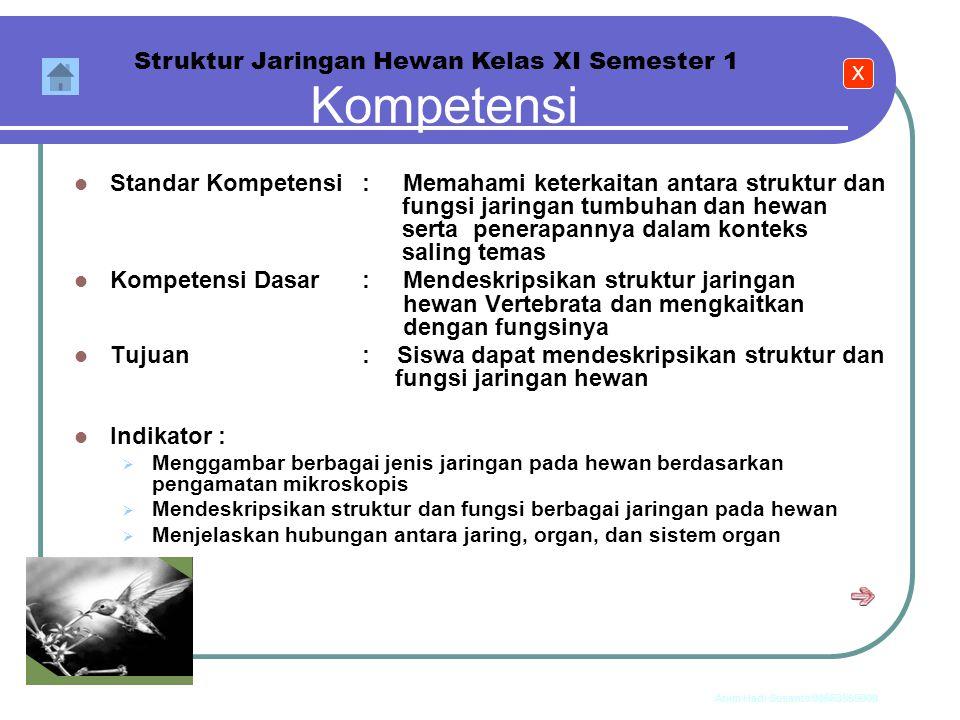 Anim Hadi Susanto 08563559009 Struktur Jaringan Hewan IKATAN KIMIA Materi X Jaringan Epitel Jaringan Otot Jaringan Syaraf Jaringan Ikat Organ Sistem O