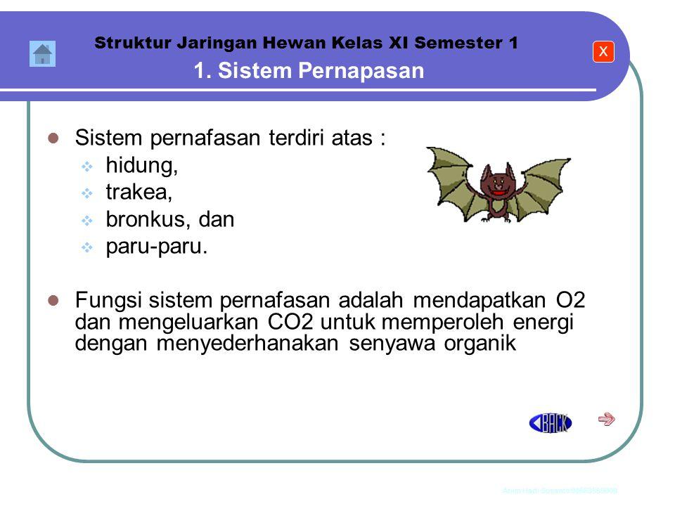 Anim Hadi Susanto 08563559009 Sel Jaringan Organ Sistem organ Individu Sistem Organ Struktur Jaringan Hewan Kelas XI Semester 1 Dalam tubuh hewan vert
