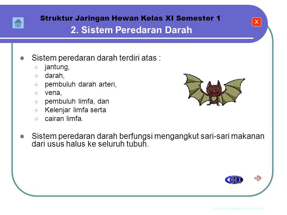 Anim Hadi Susanto 08563559009 1. Sistem Pernapasan Struktur Jaringan Hewan Kelas XI Semester 1 Sistem pernafasan terdiri atas :  hidung,  trakea, 