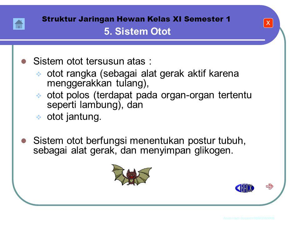 Anim Hadi Susanto 08563559009 4. Sistem Rangka Struktur Jaringan Hewan Kelas XI Semester 1 Sistem rangka pada hewan vertebrata dapat dibedakan menjadi