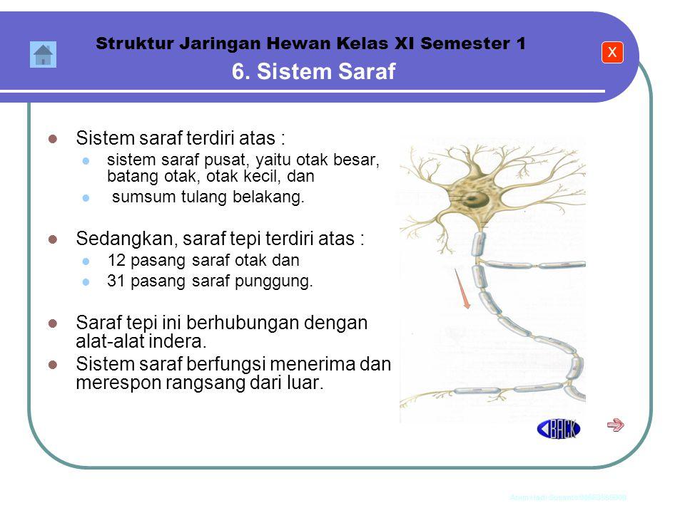 Anim Hadi Susanto 08563559009 5. Sistem Otot Struktur Jaringan Hewan Kelas XI Semester 1 Sistem otot tersusun atas :  otot rangka (sebagai alat gerak