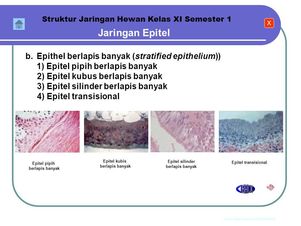 Anim Hadi Susanto 08563559009 Jaringan Epitel Jaringan epitel mempunyai bentuk sel penyusun yang bermacam-macam tergantung fungsi dan letaknya. Jaring