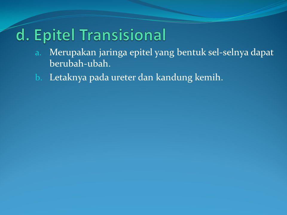 a. Merupakan jaringa epitel yang bentuk sel-selnya dapat berubah-ubah. b. Letaknya pada ureter dan kandung kemih.