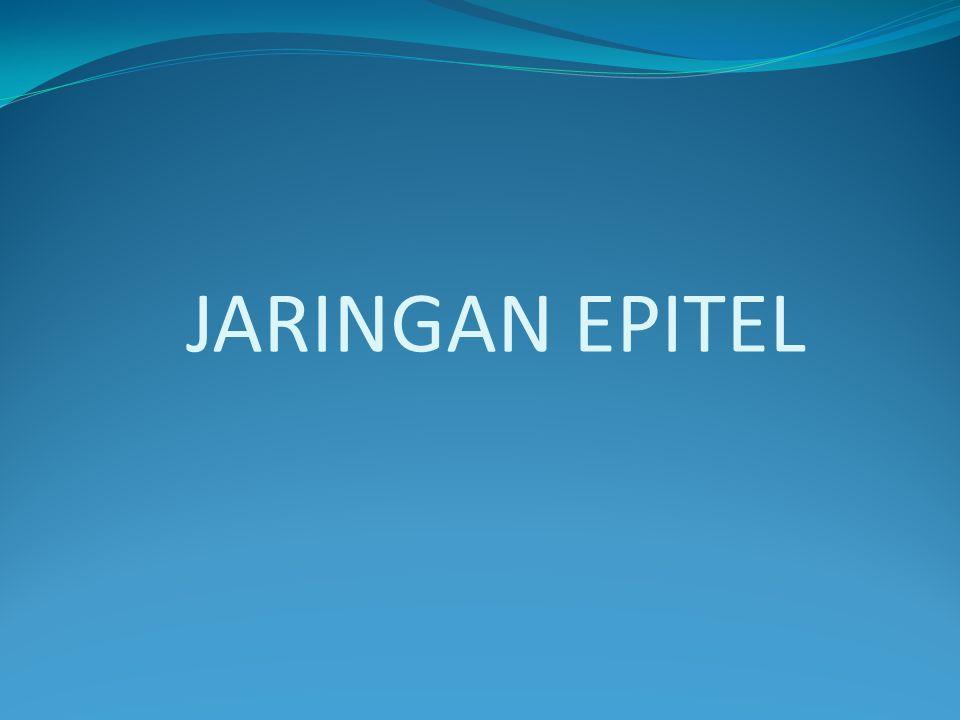  J JARINGAN EPITEL Jaringan epitel adalah jaringan yang melapisi atau menutup permukaan tubuh, organ tubuh, rongga tubuh, atau permukaan saluran tubuh hewan