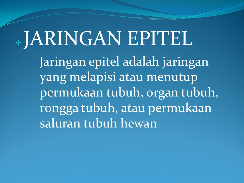  J JARINGAN EPITEL Jaringan epitel adalah jaringan yang melapisi atau menutup permukaan tubuh, organ tubuh, rongga tubuh, atau permukaan saluran tub