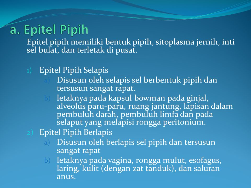 Epitel pipih memiliki bentuk pipih, sitoplasma jernih, inti sel bulat, dan terletak di pusat. 1) Epitel Pipih Selapis a) Disusun oleh selapis sel berb