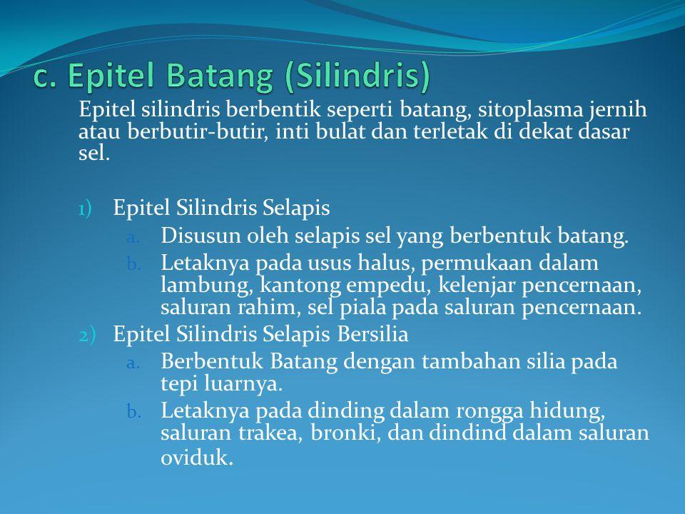 Epitel silindris berbentik seperti batang, sitoplasma jernih atau berbutir-butir, inti bulat dan terletak di dekat dasar sel. 1) Epitel Silindris Sela