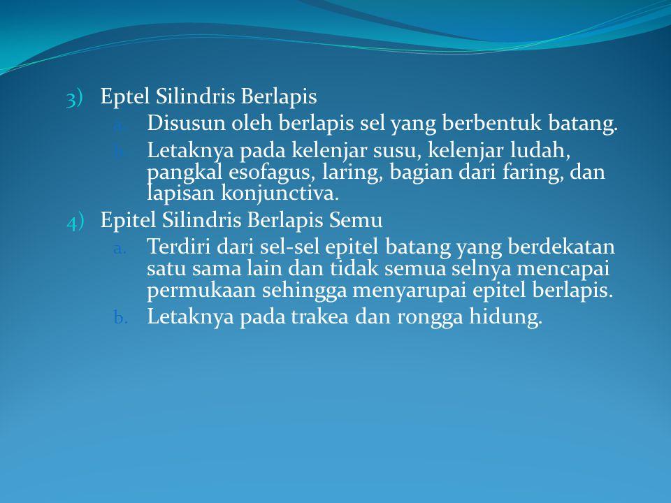 3) Eptel Silindris Berlapis a. Disusun oleh berlapis sel yang berbentuk batang. b. Letaknya pada kelenjar susu, kelenjar ludah, pangkal esofagus, lari