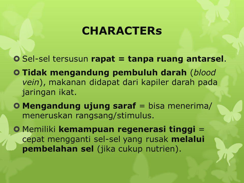 EPITHELIUM Classification  Klasifikasi berdasarkan bentuk dan jumlah lapisan.