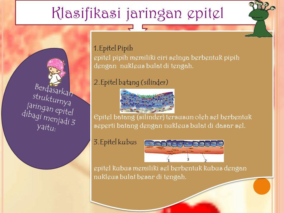Klasifikasi jaringan epitel Berdasarkan strukturnya jaringan epitel dibagi menjadi 3 yaitu: 1.Epitel Pipih epitel pipih memiliki ciri selnya berbentuk