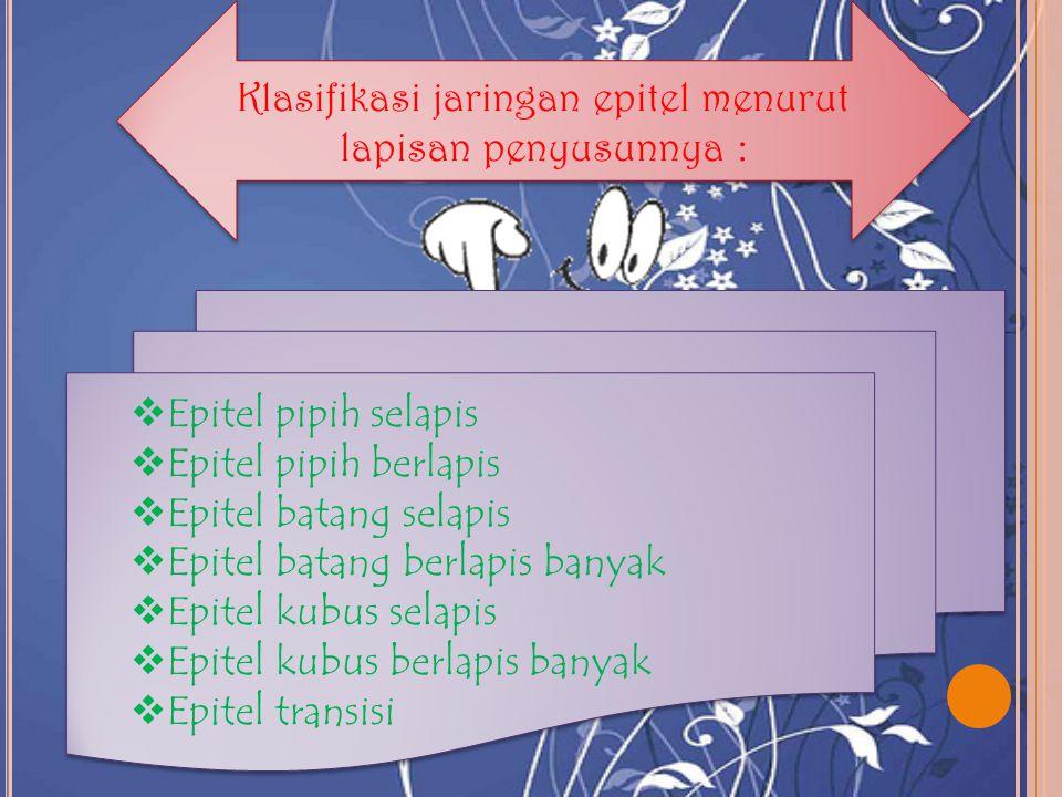 Klasifikasi jaringan epitel menurut lapisan penyusunnya :  Epitel pipih selapis  Epitel pipih berlapis  Epitel batang selapis  Epitel batang berla