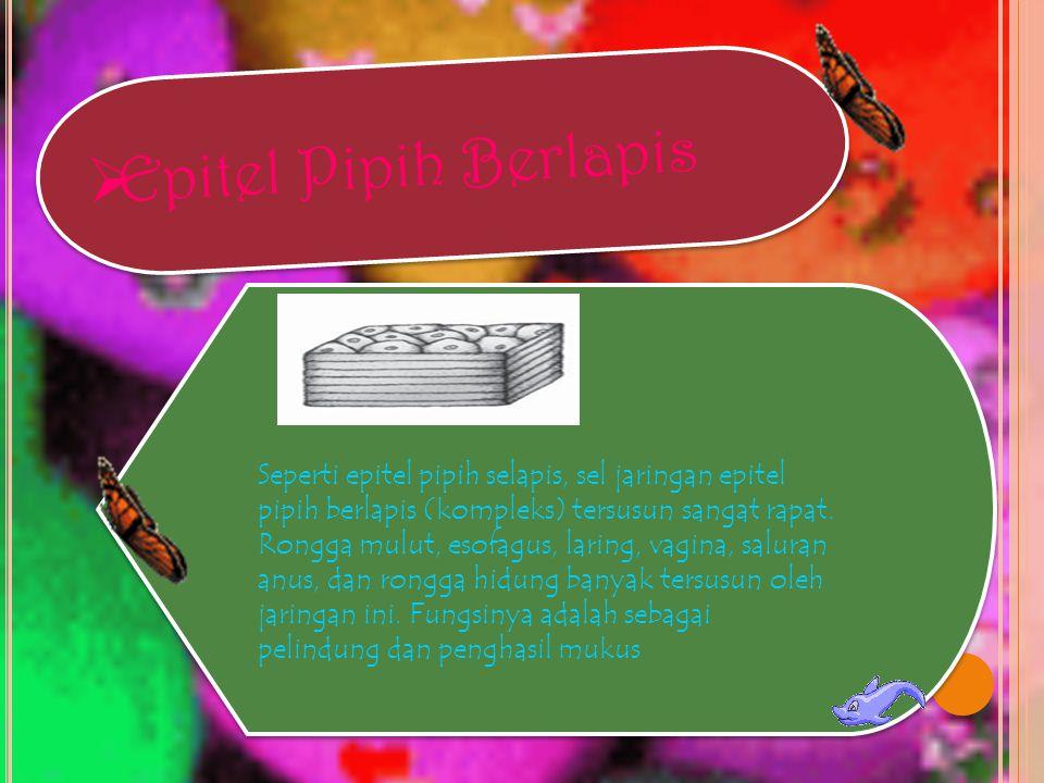  Epitel Batang Selapis Sel berbentuk batang, sitoplasma jernih, dengan inti sel bulat berada di dekat dasar merupakan ciri jaringan ini.