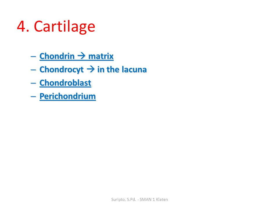 4. Cartilage – Chondrin  matrix – Chondrocyt  in the lacuna – Chondroblast – Perichondrium Suripto, S.Pd. - SMAN 1 Klaten