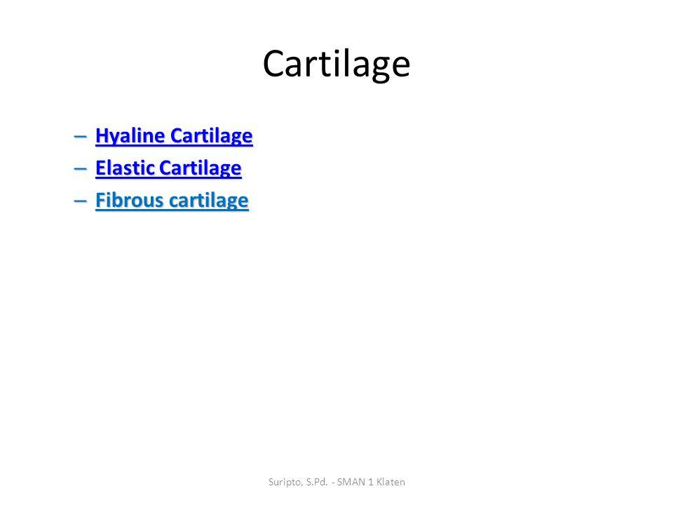 Cartilage – Hyaline Cartilage Hyaline Cartilage Hyaline Cartilage – Elastic Cartilage Elastic Cartilage Elastic Cartilage – Fibrous cartilage Suripto,