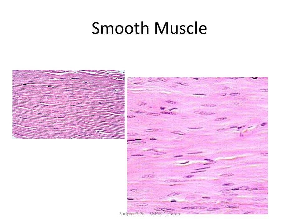 Smooth Muscle Suripto, S.Pd. - SMAN 1 Klaten