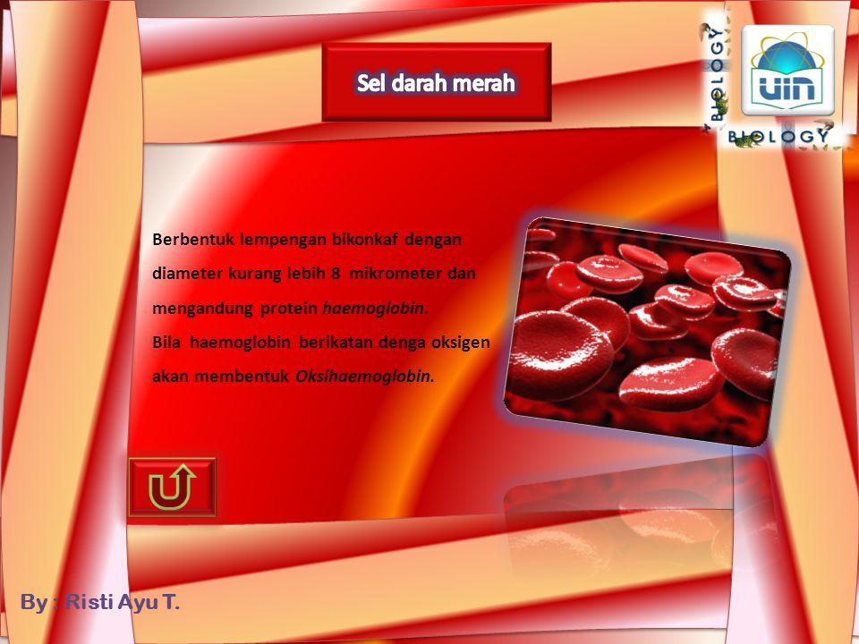 By : Risti Ayu T. Sel darah putih (Leukosit) memiliki sebuah nukleus dan tidak mengandung haemoglobin. Melakukan amoeboid Granulosit : leukosit yang m