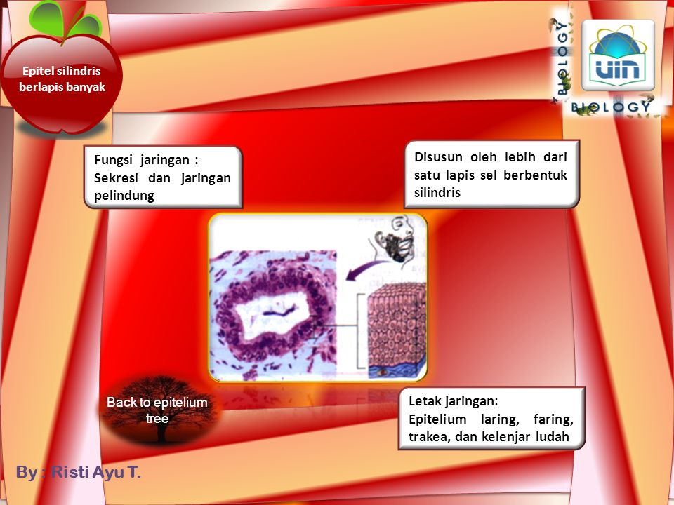 By : Risti Ayu T. more Jaringan Ikat