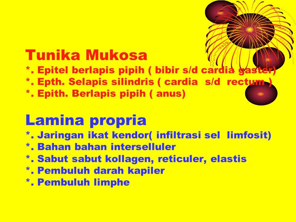 Tunika Mukosa *. Epitel berlapis pipih ( bibir s/d cardia gaster) *. Epth. Selapis silindris ( cardia s/d rectum ) *. Epith. Berlapis pipih ( anus) La