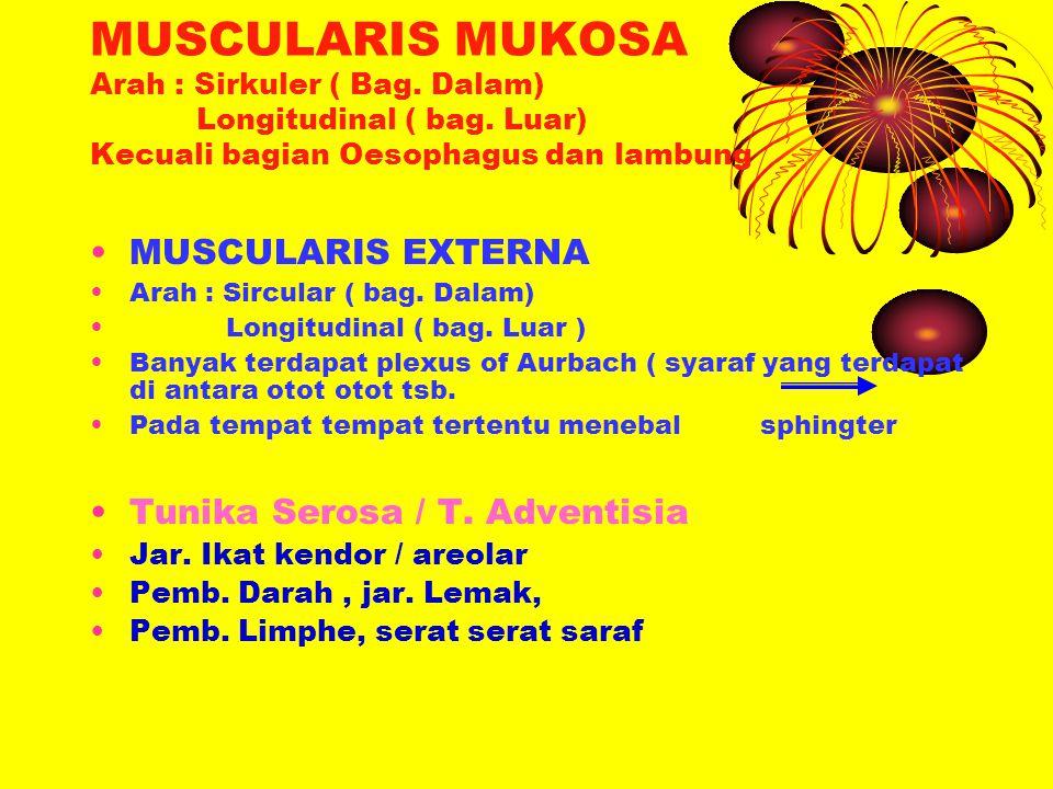 MUSCULARIS MUKOSA Arah : Sirkuler ( Bag. Dalam) Longitudinal ( bag. Luar) Kecuali bagian Oesophagus dan lambung MUSCULARIS EXTERNA Arah : Sircular ( b