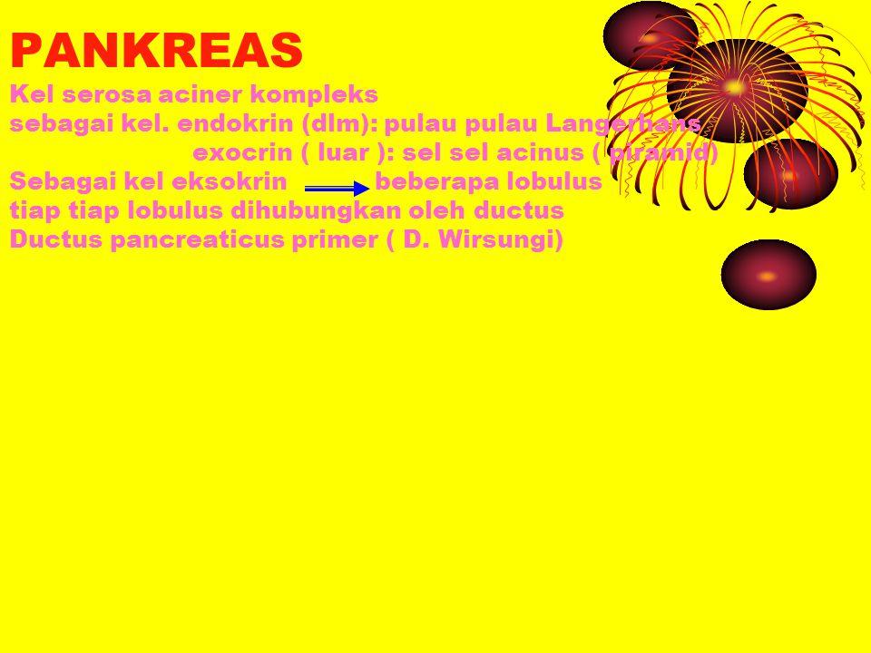 PANKREAS Kel serosa aciner kompleks sebagai kel. endokrin (dlm): pulau pulau Langerhans exocrin ( luar ): sel sel acinus ( piramid) Sebagai kel eksokr