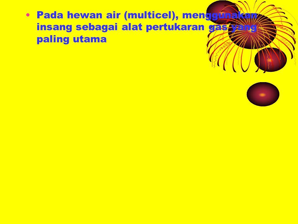 Sistem trachea dan paru paru merupakan adaptasi respirasi pada hewan darat