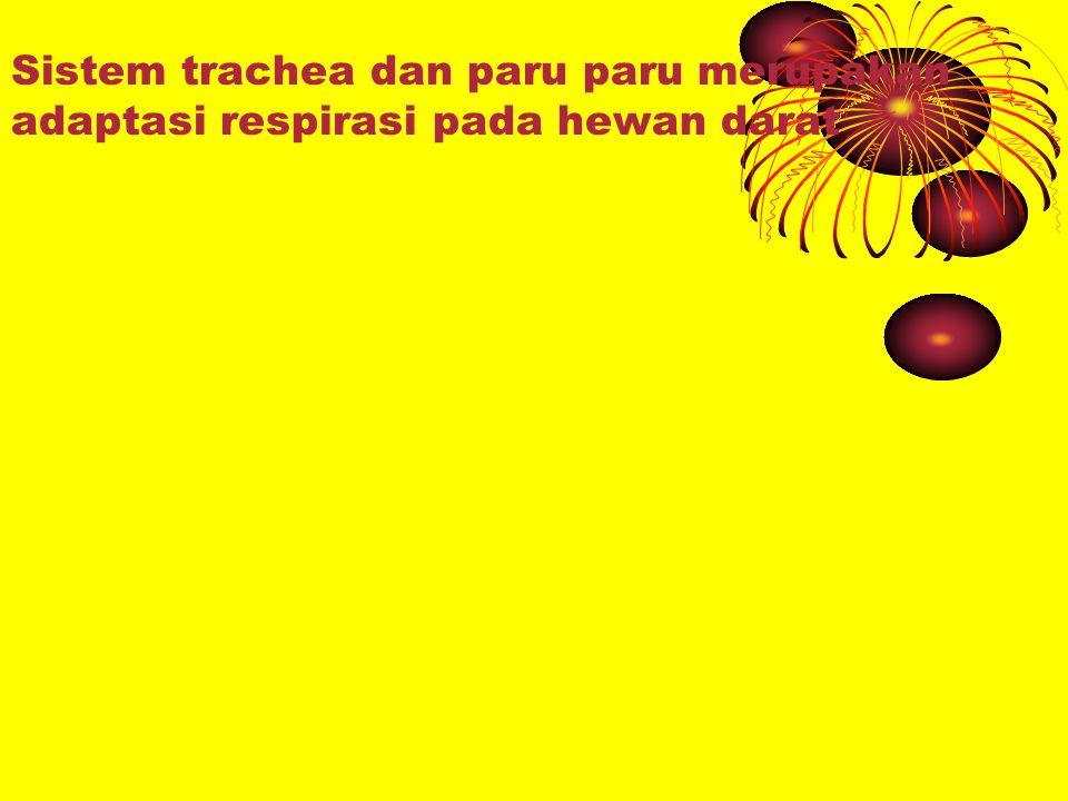 KELENJAR PENCERNAAN MAKANAN PADA DINDING PENCERNAAN Distal oesophagus kel.