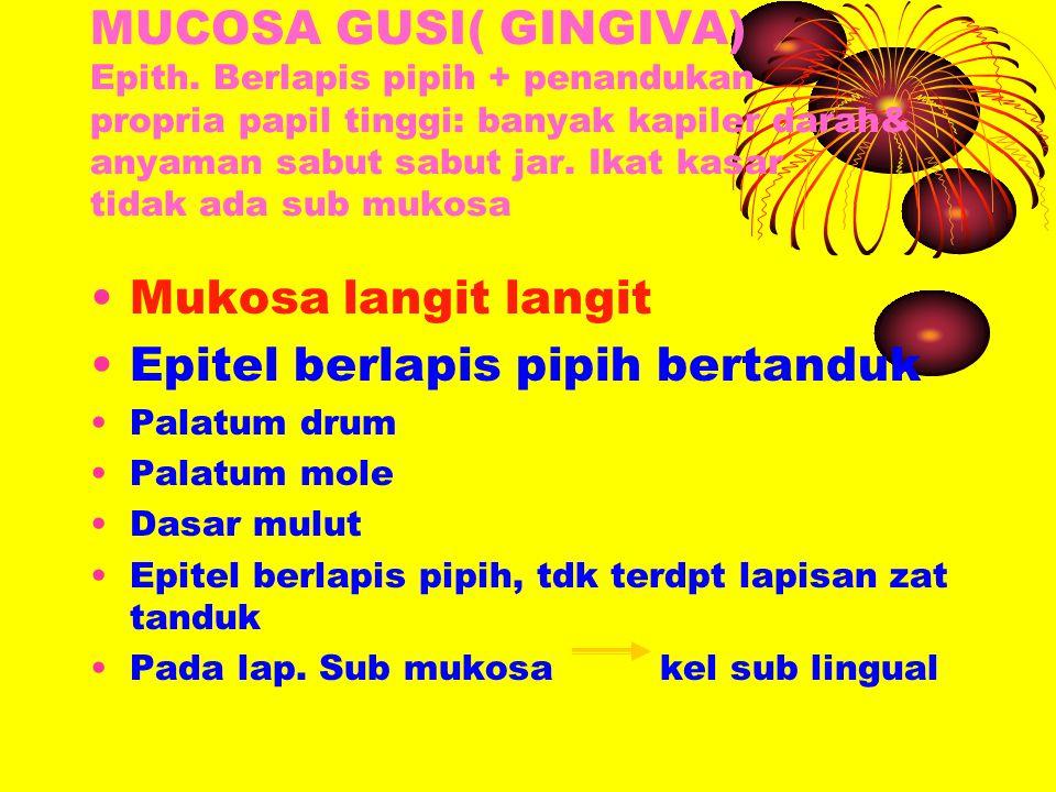 MUCOSA GUSI( GINGIVA) Epith. Berlapis pipih + penandukan propria papil tinggi: banyak kapiler darah& anyaman sabut sabut jar. Ikat kasar tidak ada sub