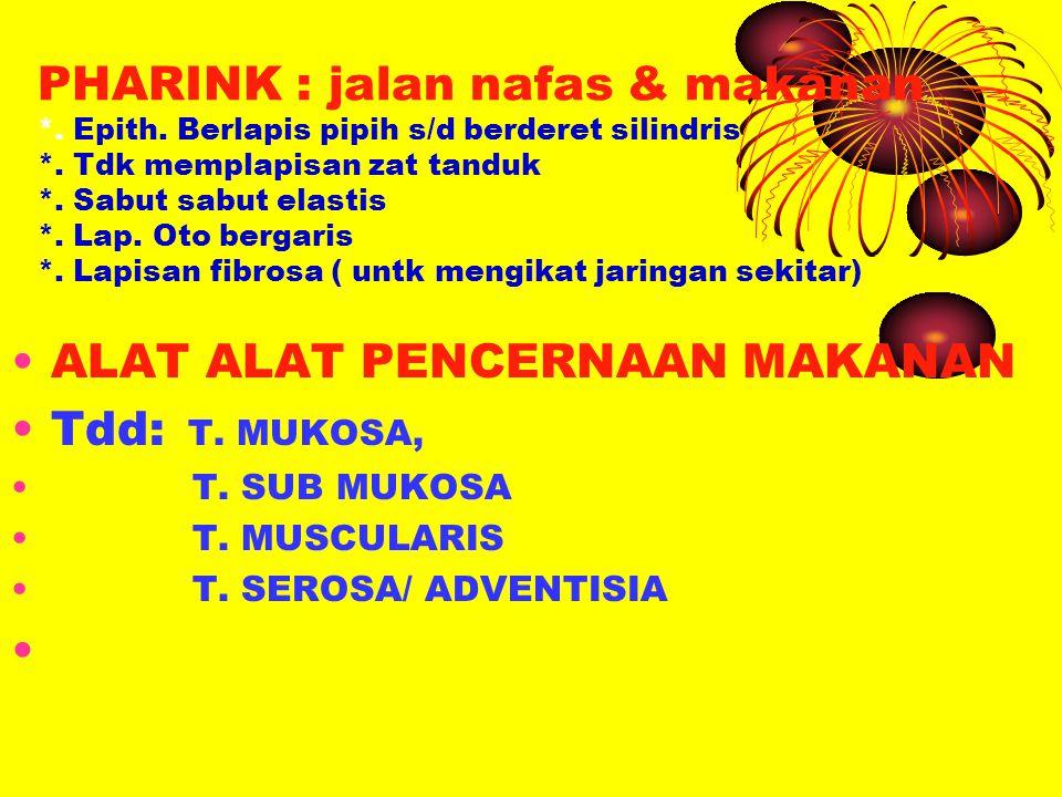 Tunika Mukosa *.Epitel berlapis pipih ( bibir s/d cardia gaster) *.